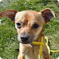 Adopt A Pet :: Caden - Meridian, ID