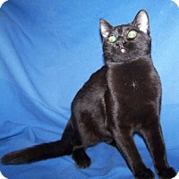 Adopt A Pet :: Alyss - Colorado Springs, CO