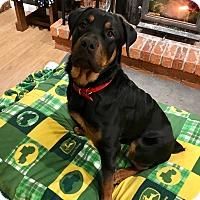 Adopt A Pet :: Titan - Frederick, PA
