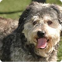 Adopt A Pet :: Luke - Lakeland, FL