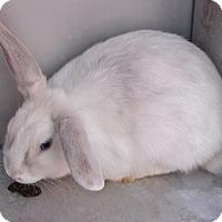 Adopt A Pet :: *CINDERELLA - Las Vegas, NV