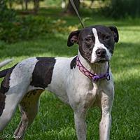 Adopt A Pet :: Ava - Daleville, AL