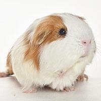 Adopt A Pet :: *Urgent* Mattie - Fullerton, CA