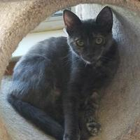 Adopt A Pet :: Luna - Carson City, NV