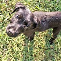 Adopt A Pet :: Benjen - Knoxville, TN