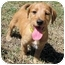 Photo 2 - Dachshund/Terrier (Unknown Type, Small) Mix Puppy for adoption in Mahwah, New Jersey - Marcy