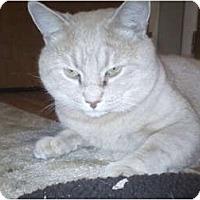 Adopt A Pet :: Leo - Jenkintown, PA