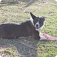 Adopt A Pet :: Lacie - Salt Lake City, UT