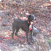 Adopt A Pet :: Ace - Seneca, SC