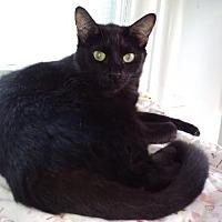 Adopt A Pet :: Daiki - Grand Ledge, MI