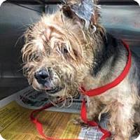 Adopt A Pet :: Abbie - West Palm Beach, FL