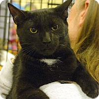 Adopt A Pet :: TommyPickles - Pittstown, NJ