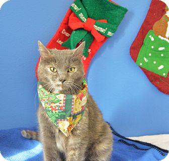 Domestic Shorthair Cat for adoption in Buena Vista, Colorado - Peridot