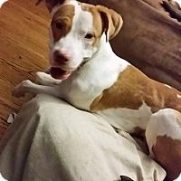 Adopt A Pet :: Nemo - bridgeport, CT