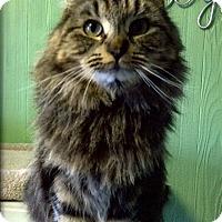 Adopt A Pet :: Mocha - Medway, MA