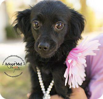 Italian Greyhound/Dachshund Mix Dog for adoption in Inland Empire, California - MAGGIE
