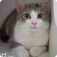 Adopt A Pet :: Toby - Merrifield, VA