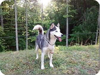 Husky Dog for adoption in North Wilkesboro, North Carolina - Lulu