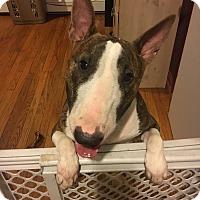 Adopt A Pet :: Roxy - Prospect, CT