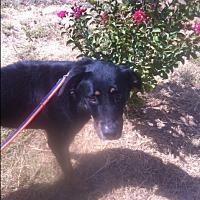 Adopt A Pet :: Gomer - springtown, TX