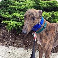 Adopt A Pet :: Timmy - Spencerville, MD