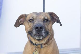 Pit Bull Terrier Mix Dog for adoption in Mountain Home, Arkansas - Red