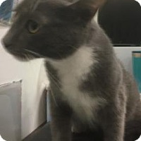 Adopt A Pet :: Tom - Gulfport, MS