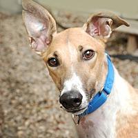 Adopt A Pet :: Casper - Ware, MA