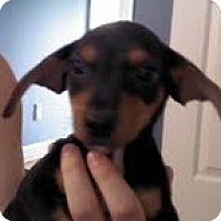 Adopt A Pet :: Ace - Washington, NC