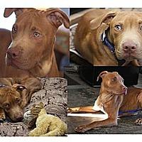 Adopt A Pet :: Sonny - Santa Monica, CA
