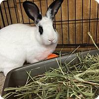 Adopt A Pet :: Boz - Williston, FL