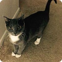 Adopt A Pet :: Doughty - Laguna Woods, CA
