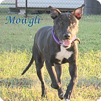 Adopt A Pet :: Mowgli - Winter Haven, FL