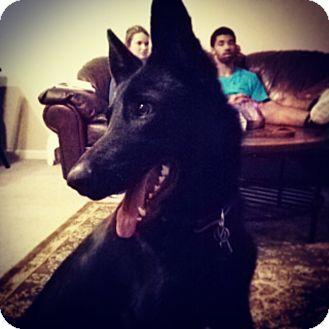German Shepherd Dog Mix Dog for adoption in Greeneville, Tennessee - Rosie
