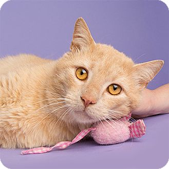 Domestic Shorthair Cat for adoption in Wilmington, Delaware - Buffy