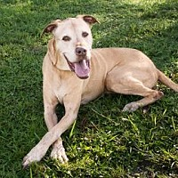 Adopt A Pet :: Jake - Loxahatchee, FL