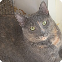 Adopt A Pet :: Stacey - New Iberia, LA