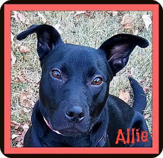 Labrador Retriever Mix Puppy for adoption in Memphis, Tennessee - Allie-Adoption Pending