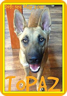 German Shepherd Dog Mix Dog for adoption in Manchester, New Hampshire - TOPAZ