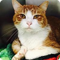 Adopt A Pet :: Jax - Jackson, NJ