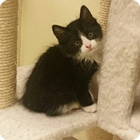 Adopt A Pet :: Meenie - Phoenix, AZ