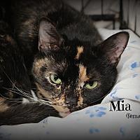 Adopt A Pet :: Mia - Glen Mills, PA