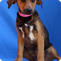 Adopt A Pet :: Rek'sai - Waldorf, MD