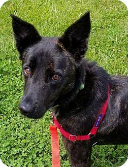 Cattle Dog/Labrador Retriever Mix Dog for adoption in Hendersonville, North Carolina - Linnie