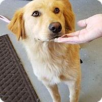 Adopt A Pet :: SUNNY - Murrells Inlet, SC