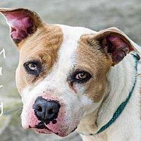 Adopt A Pet :: Mariella - Sidney, NE