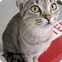 Adopt A Pet :: Kiki - Georgetown, TX