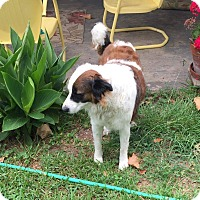 Adopt A Pet :: Jade - Burlington, VT