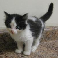 Adopt A Pet :: Vanessa - Gary, IN