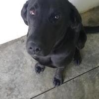 Adopt A Pet :: Atmos - Paducah, KY